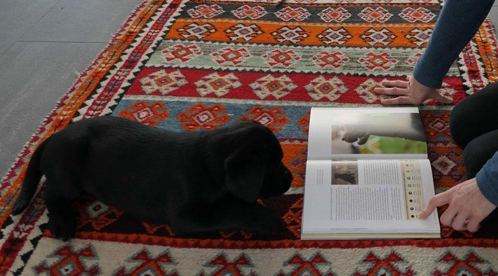 6: Hunde lesen lernen