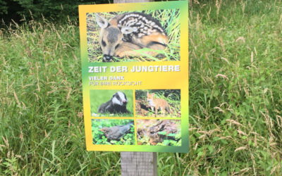 24: Zähmung trifft Wildtier
