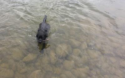 Ein Wasserhund, endlich