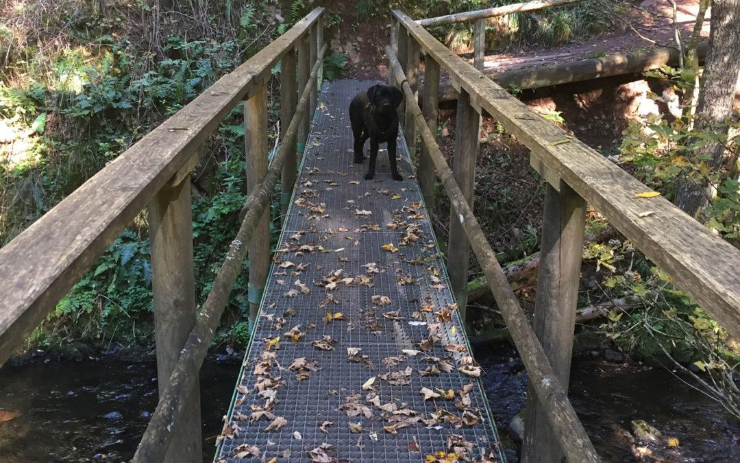 Auf dem Schluchtensteig, Zweiter Teil (Wandern im Schwarzwald 4)