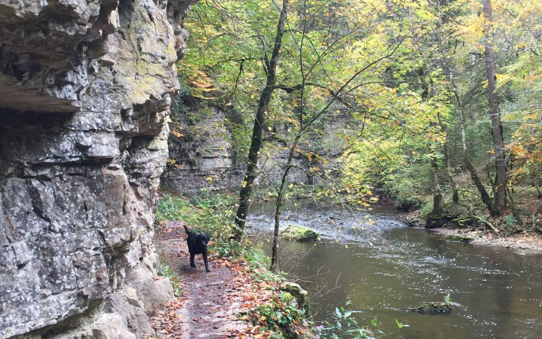 Auf dem Schluchtensteig, Erster Teil (Wandern im Schwarzwald 3)