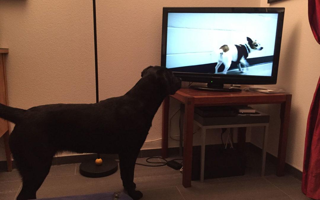 Lotte schaut fern