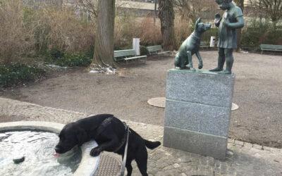 Unser Frust mit den Hundetrainern (Plauschstunde 1)
